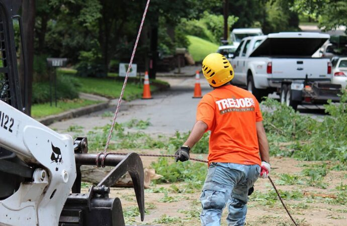 Arborist Consultations-Fresno Tree Trimming and Stump Grinding Services-We Offer Tree Trimming Services, Tree Removal, Tree Pruning, Tree Cutting, Residential and Commercial Tree Trimming Services, Storm Damage, Emergency Tree Removal, Land Clearing, Tree Companies, Tree Care Service, Stump Grinding, and we're the Best Tree Trimming Company Near You Guaranteed!