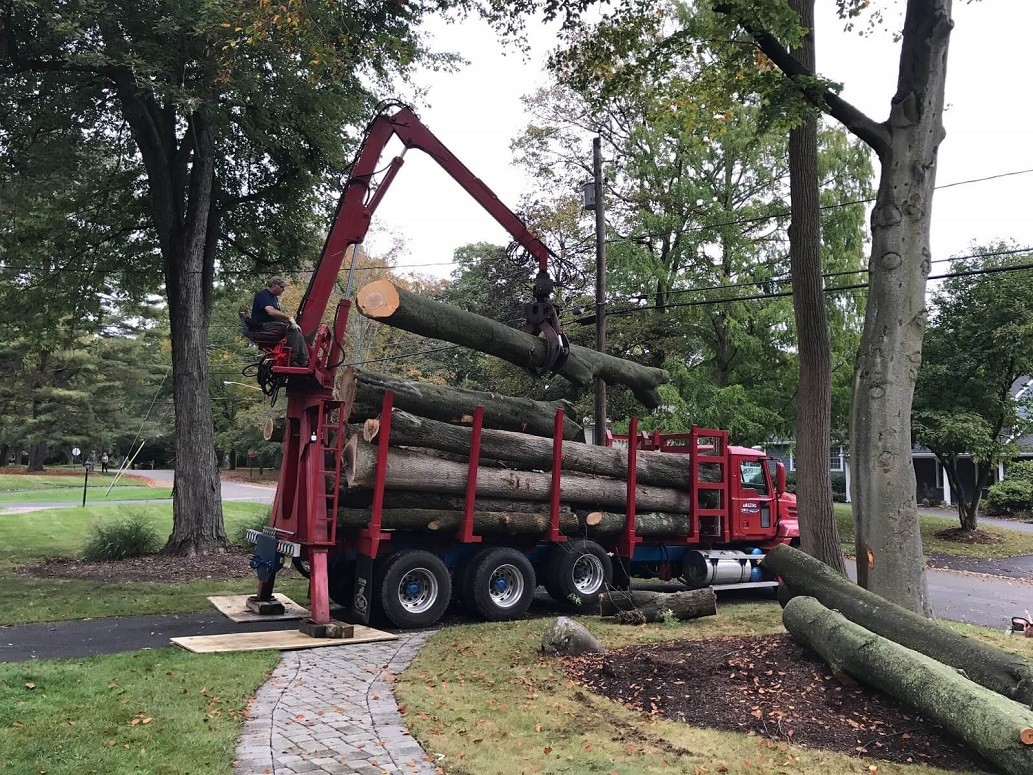 Commercial Tree Services-Fresno Tree Trimming and Stump Grinding Services-We Offer Tree Trimming Services, Tree Removal, Tree Pruning, Tree Cutting, Residential and Commercial Tree Trimming Services, Storm Damage, Emergency Tree Removal, Land Clearing, Tree Companies, Tree Care Service, Stump Grinding, and we're the Best Tree Trimming Company Near You Guaranteed!
