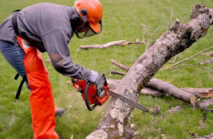 Emergency Tree Removal-Fresno Tree Trimming and Stump Grinding Services-We Offer Tree Trimming Services, Tree Removal, Tree Pruning, Tree Cutting, Residential and Commercial Tree Trimming Services, Storm Damage, Emergency Tree Removal, Land Clearing, Tree Companies, Tree Care Service, Stump Grinding, and we're the Best Tree Trimming Company Near You Guaranteed!