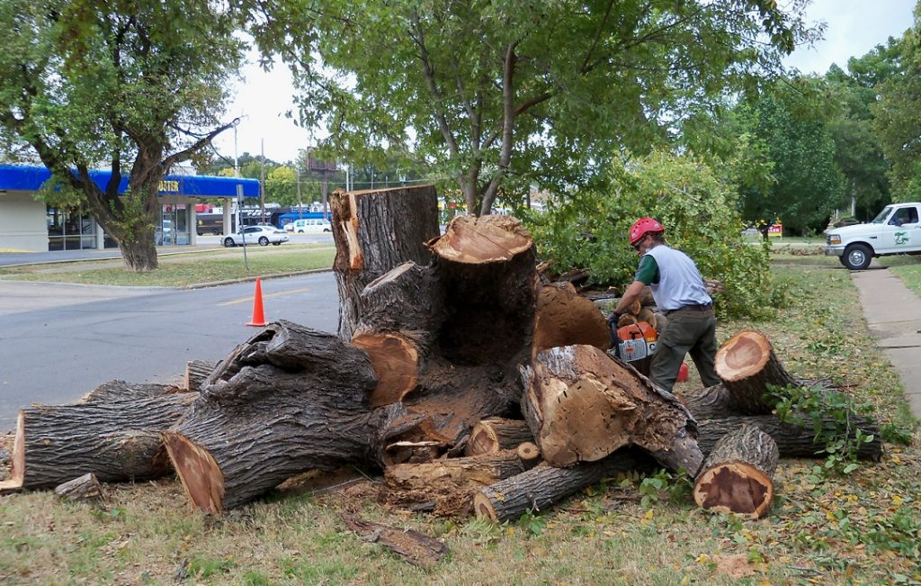 Fresno Tree Trimming and Stump Grinding Services Header Image New-We Offer Tree Trimming Services, Tree Removal, Tree Pruning, Tree Cutting, Residential and Commercial Tree Trimming Services, Storm Damage, Emergency Tree Removal, Land Clearing, Tree Companies, Tree Care Service, Stump Grinding, and we're the Best Tree Trimming Company Near You Guaranteed!