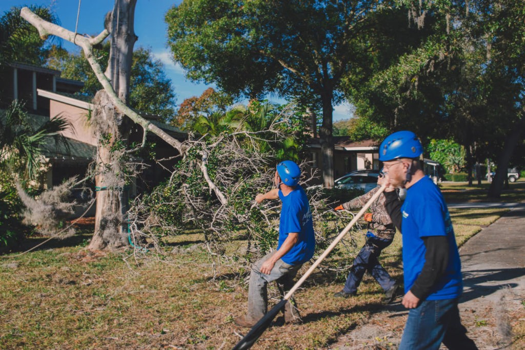 Residential Tree Services-Fresno Tree Trimming and Stump Grinding Services-We Offer Tree Trimming Services, Tree Removal, Tree Pruning, Tree Cutting, Residential and Commercial Tree Trimming Services, Storm Damage, Emergency Tree Removal, Land Clearing, Tree Companies, Tree Care Service, Stump Grinding, and we're the Best Tree Trimming Company Near You Guaranteed!