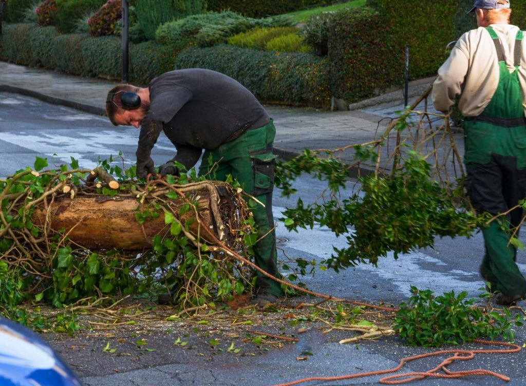 Services-Fresno Tree Trimming and Stump Grinding Services-We Offer Tree Trimming Services, Tree Removal, Tree Pruning, Tree Cutting, Residential and Commercial Tree Trimming Services, Storm Damage, Emergency Tree Removal, Land Clearing, Tree Companies, Tree Care Service, Stump Grinding, and we're the Best Tree Trimming Company Near You Guaranteed!