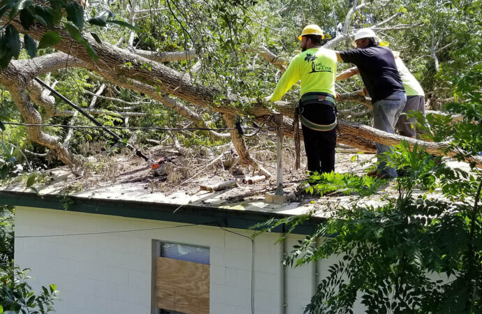 Storm Damage-Fresno Tree Trimming and Stump Grinding Services-We Offer Tree Trimming Services, Tree Removal, Tree Pruning, Tree Cutting, Residential and Commercial Tree Trimming Services, Storm Damage, Emergency Tree Removal, Land Clearing, Tree Companies, Tree Care Service, Stump Grinding, and we're the Best Tree Trimming Company Near You Guaranteed!