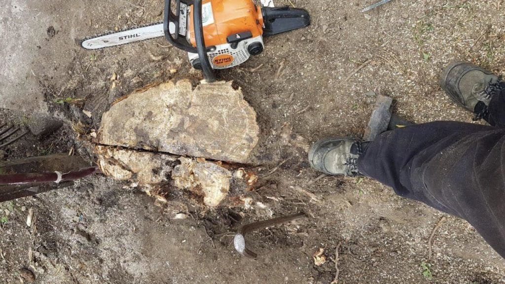 Stump Removal-Fresno Tree Trimming and Stump Grinding Services-We Offer Tree Trimming Services, Tree Removal, Tree Pruning, Tree Cutting, Residential and Commercial Tree Trimming Services, Storm Damage, Emergency Tree Removal, Land Clearing, Tree Companies, Tree Care Service, Stump Grinding, and we're the Best Tree Trimming Company Near You Guaranteed!