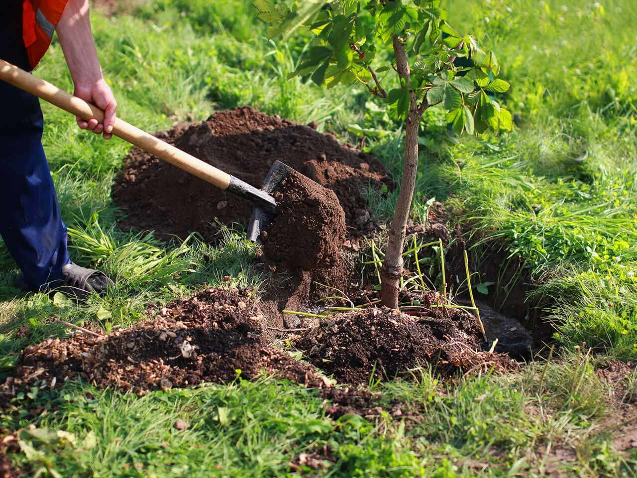 Tree Planting-Fresno Tree Trimming and Stump Grinding Services-We Offer Tree Trimming Services, Tree Removal, Tree Pruning, Tree Cutting, Residential and Commercial Tree Trimming Services, Storm Damage, Emergency Tree Removal, Land Clearing, Tree Companies, Tree Care Service, Stump Grinding, and we're the Best Tree Trimming Company Near You Guaranteed!