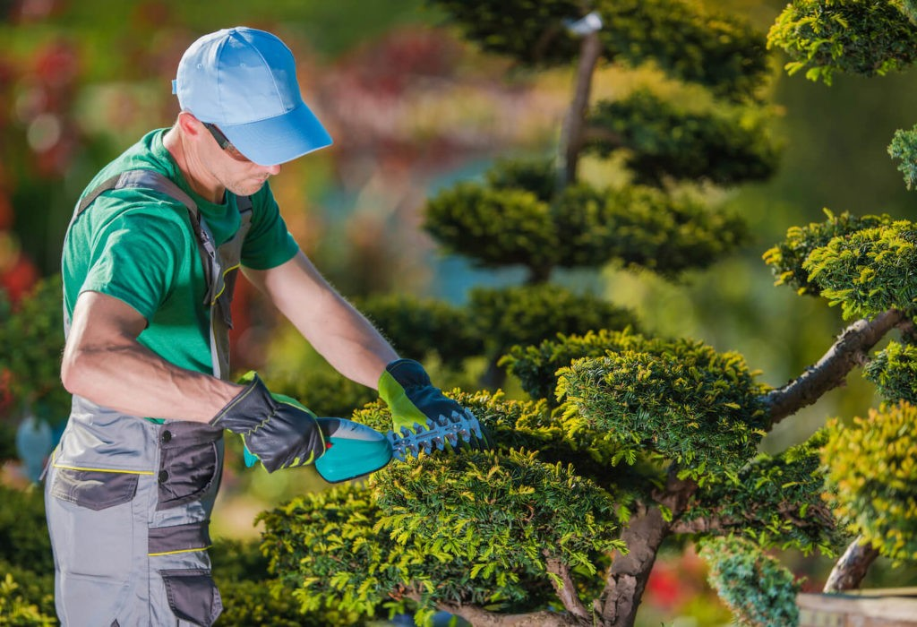 Tree Pruning-Fresno Tree Trimming and Stump Grinding Services-We Offer Tree Trimming Services, Tree Removal, Tree Pruning, Tree Cutting, Residential and Commercial Tree Trimming Services, Storm Damage, Emergency Tree Removal, Land Clearing, Tree Companies, Tree Care Service, Stump Grinding, and we're the Best Tree Trimming Company Near You Guaranteed!