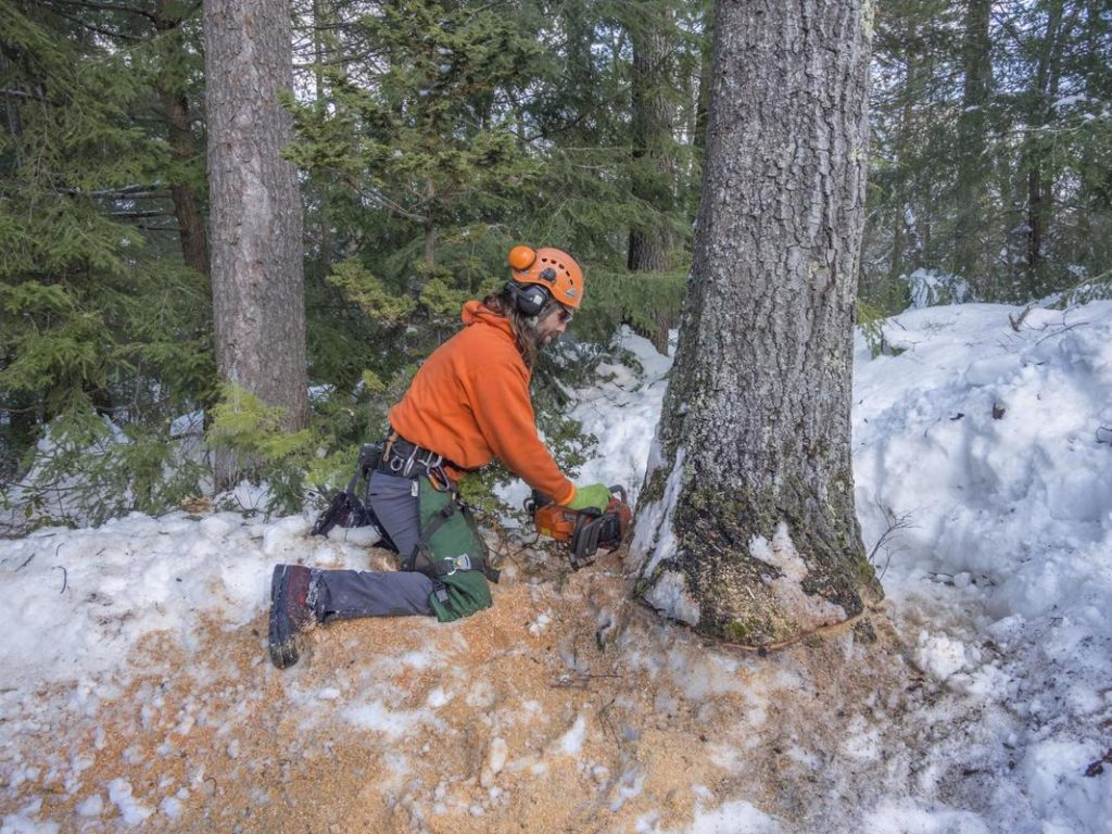Tree Removal-Fresno Tree Trimming and Stump Grinding Services-We Offer Tree Trimming Services, Tree Removal, Tree Pruning, Tree Cutting, Residential and Commercial Tree Trimming Services, Storm Damage, Emergency Tree Removal, Land Clearing, Tree Companies, Tree Care Service, Stump Grinding, and we're the Best Tree Trimming Company Near You Guaranteed!