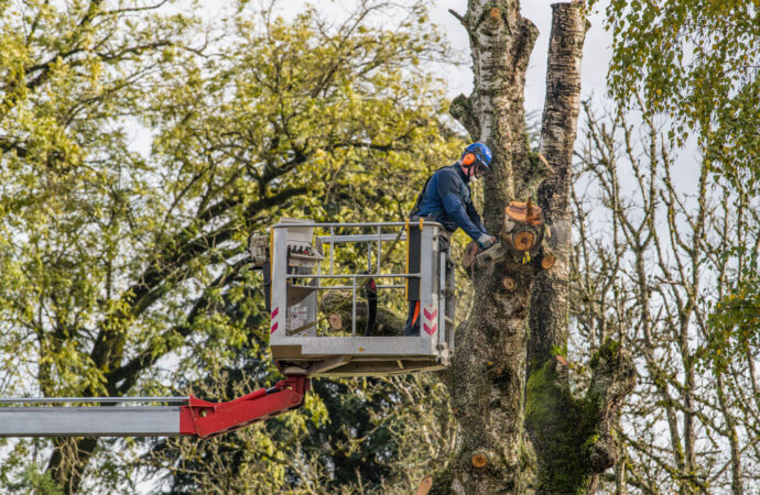 Tree Trimming-Fresno Tree Trimming and Stump Grinding Services-We Offer Tree Trimming Services, Tree Removal, Tree Pruning, Tree Cutting, Residential and Commercial Tree Trimming Services, Storm Damage, Emergency Tree Removal, Land Clearing, Tree Companies, Tree Care Service, Stump Grinding, and we're the Best Tree Trimming Company Near You Guaranteed!
