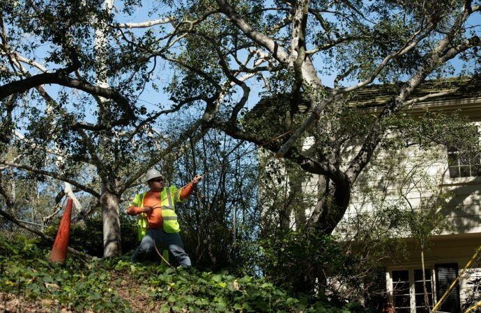 Clovis-Fresno Tree Trimming and Stump Grinding Services-We Offer Tree Trimming Services, Tree Removal, Tree Pruning, Tree Cutting, Residential and Commercial Tree Trimming Services, Storm Damage, Emergency Tree Removal, Land Clearing, Tree Companies, Tree Care Service, Stump Grinding, and we're the Best Tree Trimming Company Near You Guaranteed!