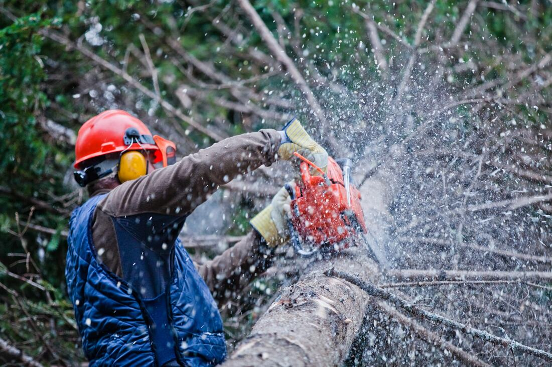 Fowler-Fresno Tree Trimming and Stump Grinding Services-We Offer Tree Trimming Services, Tree Removal, Tree Pruning, Tree Cutting, Residential and Commercial Tree Trimming Services, Storm Damage, Emergency Tree Removal, Land Clearing, Tree Companies, Tree Care Service, Stump Grinding, and we're the Best Tree Trimming Company Near You Guaranteed!