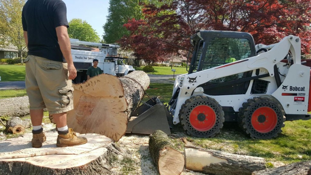 Madera-Fresno Tree Trimming and Stump Grinding Services-We Offer Tree Trimming Services, Tree Removal, Tree Pruning, Tree Cutting, Residential and Commercial Tree Trimming Services, Storm Damage, Emergency Tree Removal, Land Clearing, Tree Companies, Tree Care Service, Stump Grinding, and we're the Best Tree Trimming Company Near You Guaranteed!